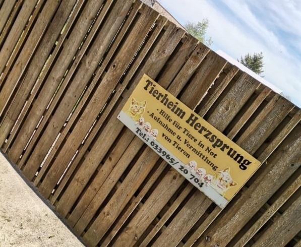 Tierheim Herzsprung Marina Kaiser Fiona Rieboldt Ardokrown Kunst für den guten Zweck Spenden Art Ausstellung Tierheim Herzsprung Kunst