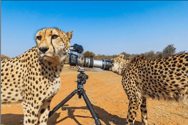 benny rebel malography niko nikolaidis kunst aus hannover fotokunst für den guten zweck jaguar leopard fotos afrika art